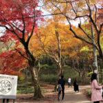 八瀬もみじの小径(京都)