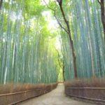 混雑を回避!「早朝に楽しめる京都の紅葉スポット」一覧