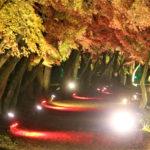 大覚寺(嵐山)の紅葉