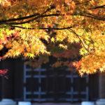 南禅寺の紅葉情報