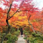 宝筐院(京都・嵐山)の紅葉