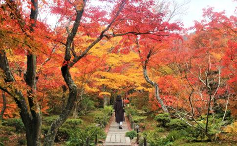嵐山周辺の紅葉