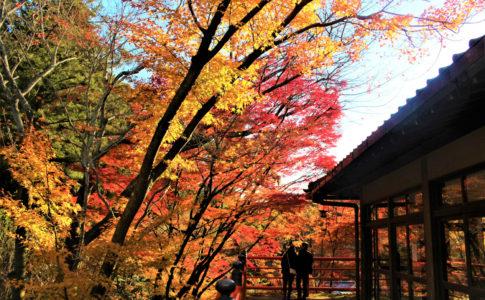 今熊野観音寺(京都)の紅葉