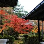 西明寺(京都)の紅葉