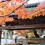赤山禅院(京都)の紅葉