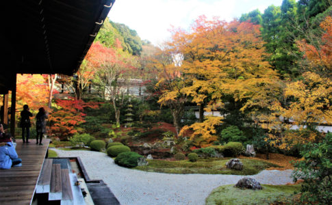 泉涌寺(京都)の紅葉