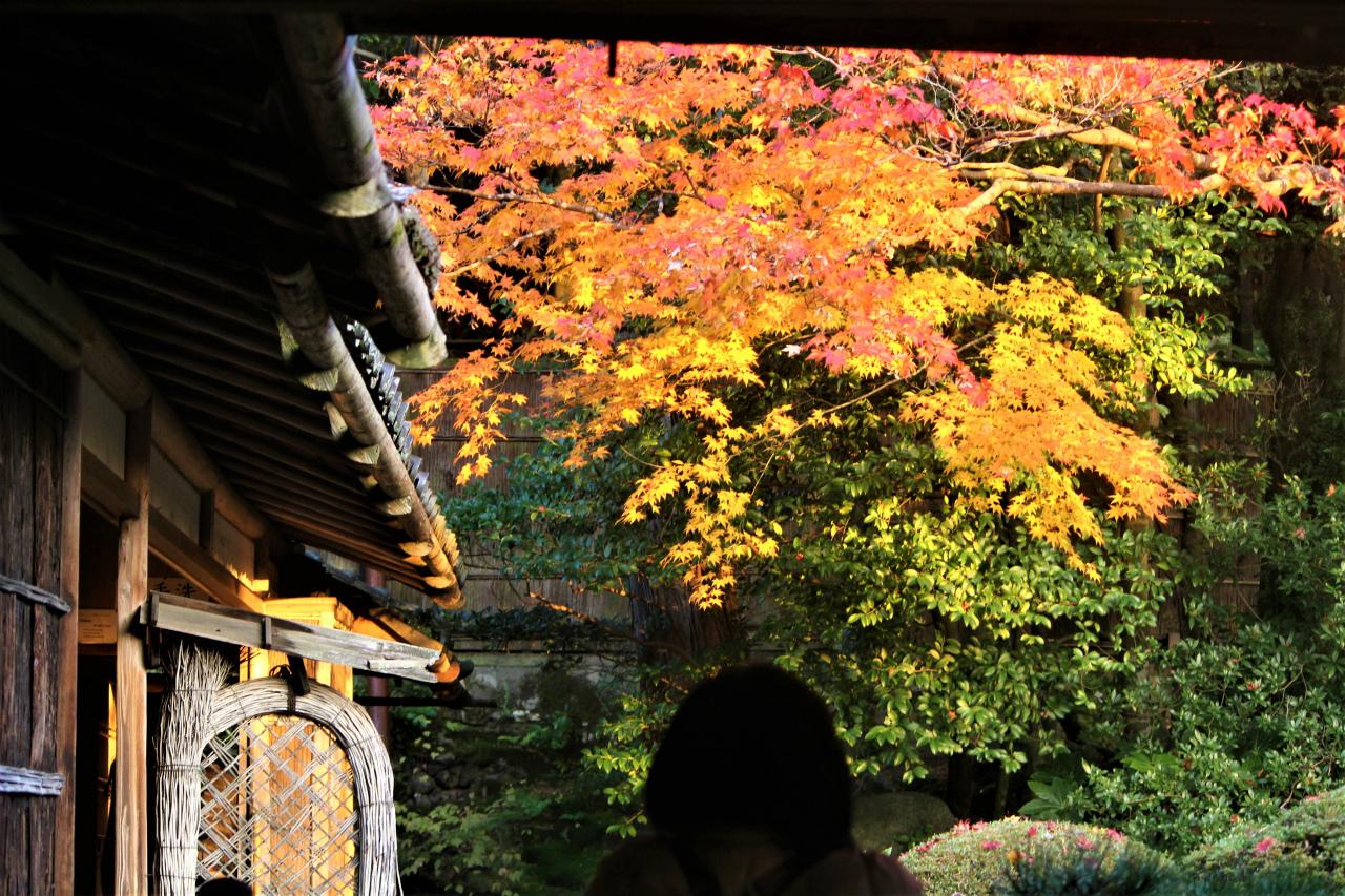 詩仙堂周辺の紅葉
