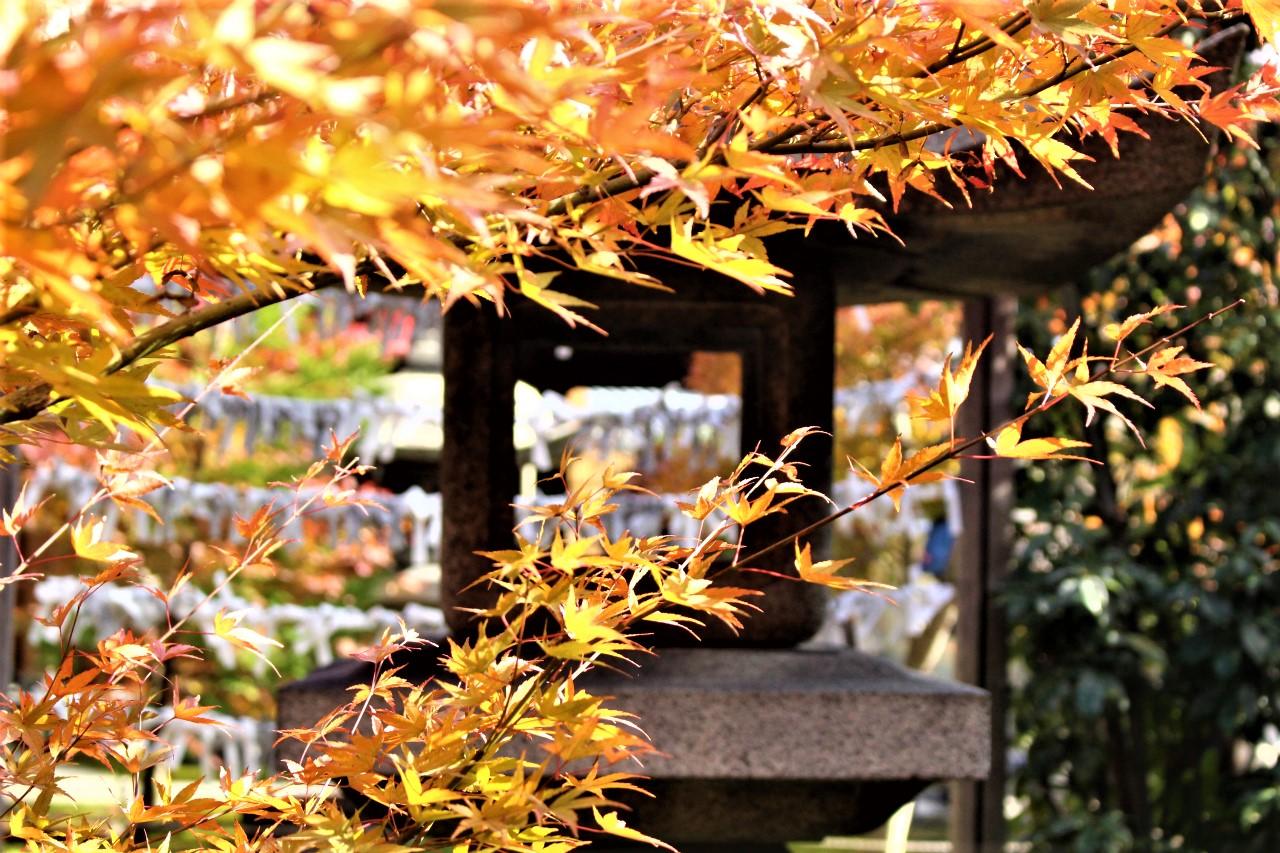 勝林寺(東福寺塔頭)の紅葉