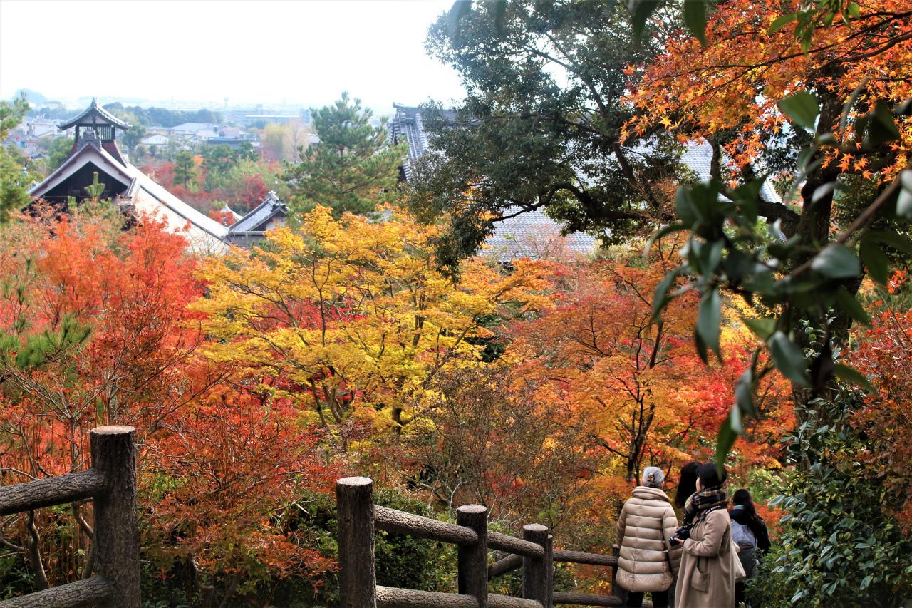 天龍寺(嵐山)の紅葉