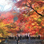 二尊院(京都市)の紅葉