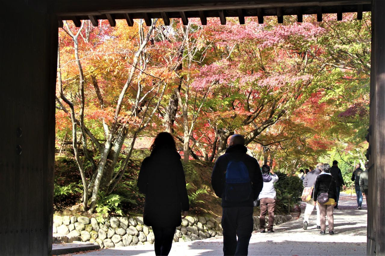 龍安寺(京都市)の紅葉