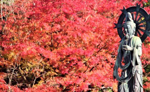 知恩院の紅葉