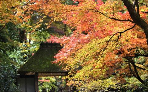 法然院(京都市)の紅葉