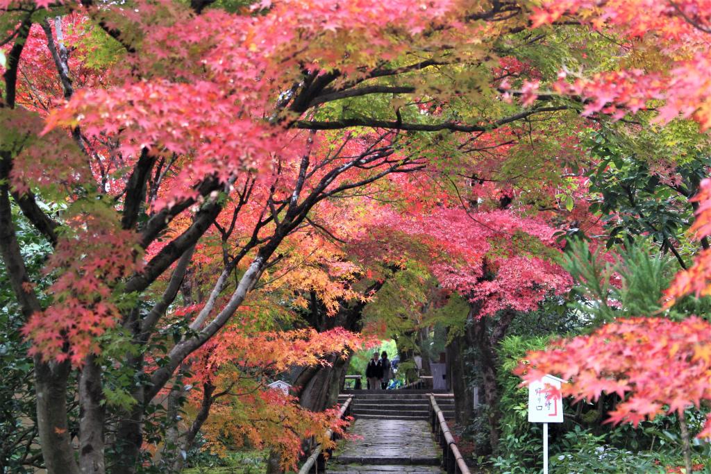 光悦寺の紅葉レポ(京都市)