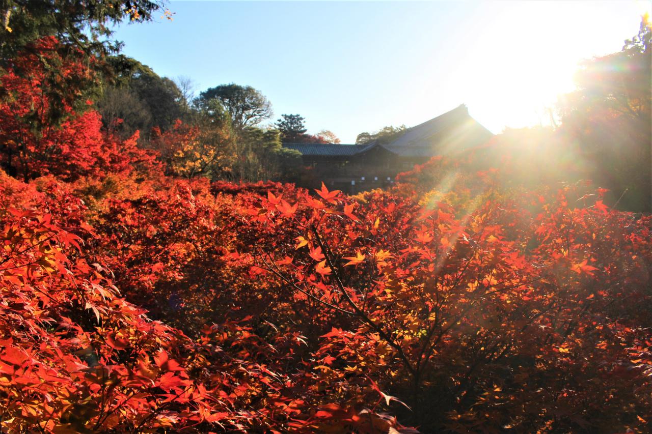 東福寺の紅葉(京都)